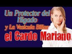 Un Protector del Higado y La Vesicula Biliar el Cardo Mariano - YouTube