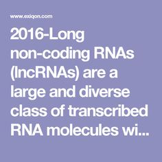 2016-Long non-coding RNAs (lncRNAs) are a large and diverse class of transcribed RNA molecules with a length of more than 200 nucleotides that do not encode proteins (or lack > 100 amino acid open reading frame). lncRNAs are thought to encompass nearly 30,000 different transcripts in humans, hence lncRNA transcripts account for the major part of the non-coding transcriptome. lncRNA discovery is still at a preliminary stage. There are many specialized lncRNA databases, which are organized…