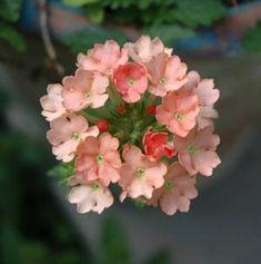 5 great hanging basket flowers