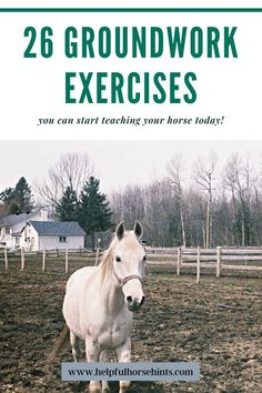 English Horseback Riding, Horseback Riding Tips, Horse Riding Tips, Horse Tips, Ground Work For Horses, Work Horses, Horse Exercises, Horse Facts, Workout At Work