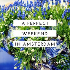 If I had to choose one city to move to, it would be Amsterdam. Ever since I visited for the first time when I was 18, I fell in love with the city. The crooked canal homes, fresh flowers in window …