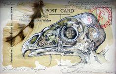 Natural History Postcard UK Artist Duncan Cameron