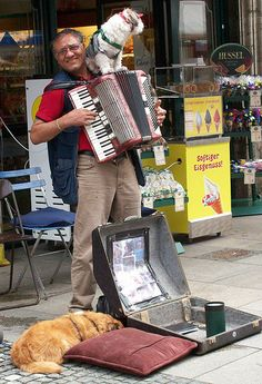 Accordion busker with dogs Schweinfurt Germany | Flickr - Photo Sharing!