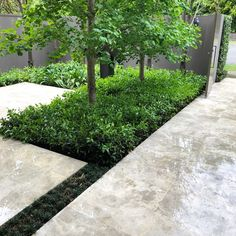 We are pressure washing tiles around this property today. They're coming up a treat, so much brighter 🤩 and clean. Landscape Design, Garden Design, Garden Maintenance, Pressure Washing, Garden Styles, Just Go, Melbourne, Entrepreneur, Tiles