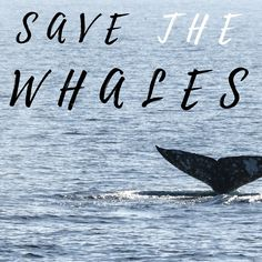 Save the Whales Relay