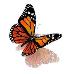 papillon: Papillon isolé de couleur orange sur un fond blanc