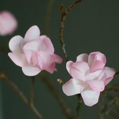 Turn a regularly coffee filter in to the sweetest cherry blossom. Easy, quick, fun and extremely cheap.