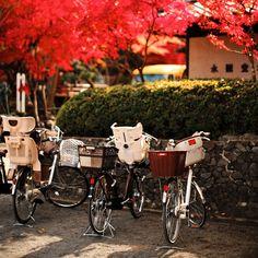 もみじの永観堂 by sunnywinds, via Flickr
