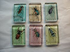 Hey, I found this really awesome Etsy listing at https://www.etsy.com/listing/234621791/6-beetle-insect-postage-stamp-glass