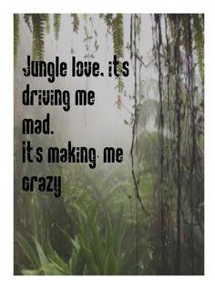 Steve Miller Band - Jungle Love song lyrics music lyrics