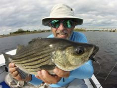 The St. Johns River also has both striped bass and striper hybrids. I caught this one while fishing for shad.