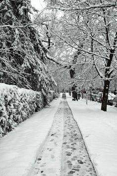 Snow Driven Roads
