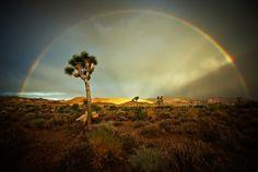 74485 National Park Dr, Joshua Tree National Park, California