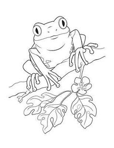 puerto rico coloring pages dibujo de un coqui Colouring Pages Animal Sketches, Animal Drawings, Drawing Sketches, Art Drawings, Frog Drawing, Frog Coloring Pages, Animal Coloring Pages, Coloring Books, Frosch Illustration