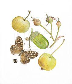 Helga Crouch Botanical Paintings Gallery2