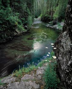 St Joe River, north #Idaho, one of my favorite swimming spots.   Visitidaho.org