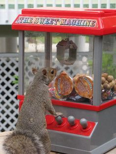 squirrel and piano - Hledat Googlem