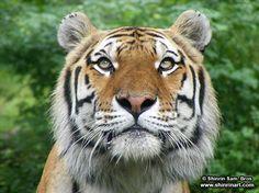 Wildlife Photography - Shinrin Art