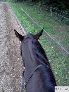Stellung beim Pferd