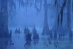 Louisiana morning in the bayou.....