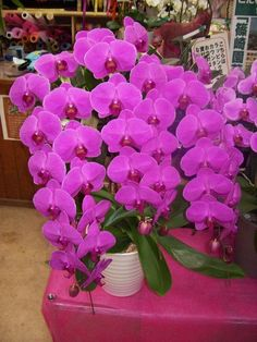 orchids by mail Hibiscus Flowers, Exotic Flowers, Tropical Flowers, Amazing Flowers, Pink Flowers, Beautiful Flowers, Orchids Garden, Orchid Plants, Colorful Plants