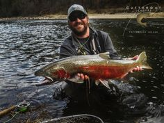 Huge Steelie on a caught with a reinforced Cutthroat Leader for Steelhead.