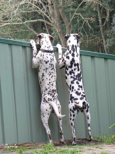 I told you that there was a ball over there!... re-pinned by StoneArtUSA.com ~ pet memorials since 2001