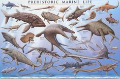 A wonderful poster of Prehistoric Marine Life - the dinosaurs who inhabited the mysterious deep-sea world of Prehistory! Check out the rest of our amazing selection of Dinosaur posters! Need Poster Mounts. Sea Dinosaurs, Prehistoric Dinosaurs, Prehistoric World, Prehistoric Creatures, Dinosaur Posters, Dinosaur Art, Extinct Animals, Sea Monsters, Fauna