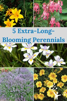 Want the easy care of perennials and the long-lasting blooms of annuals? Check these 5 perennial plants out for multi-season garden color.
