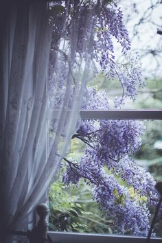 Wisteria outside the window