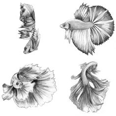Siamese Fighting Fish, 2014, Pencil on Card Stock, 4 x 6 inches each #animals…