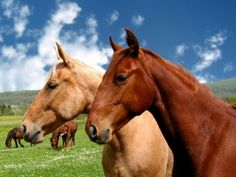 7 Facts about Equine-Assisted Activities and Therapies ...
