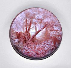 Patrick Jacobs, 'Pink Forest with Stump,' 2016, Pierogi