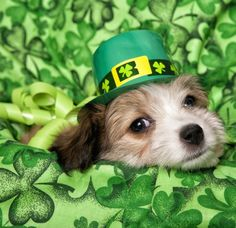 DoggieNames.com has come up with a list of Irish names that might suit your new furry family member. How about Clover or Guinness or Finn?