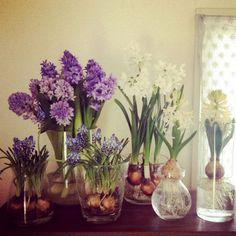 球根C Bulb Flowers, Green Flowers, Love Flowers, Spring Flowers, Beautiful Flowers, Green Leaves, Big Garden, Water Garden, Ikebana Flower Arrangement