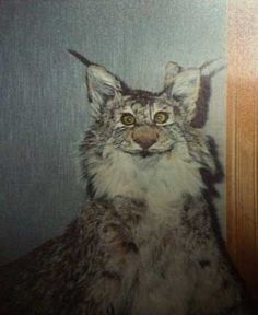 19-photos-of-bad-taxidermy -- very funny