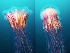 Brilliant Jellyfish Photography - My Modern Met