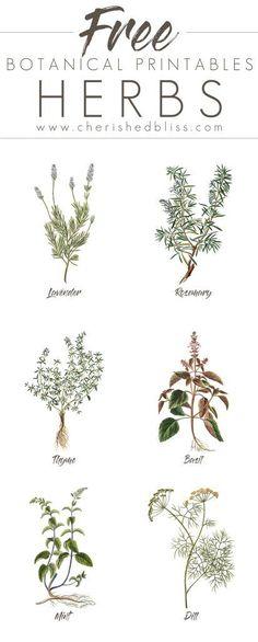Spring-Herb-Printables.jpg (412×1024)