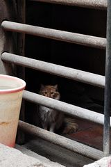 Lonely cat in a Xiguan House on Enning Road
