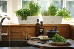 El cuidado de las plantas aromáticas