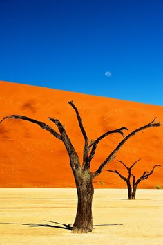 Deadvlei, Namib Desert, Namibia--Seen in The Fall and in The Cell
