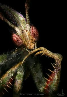 Idolomantis Diabolica, commonly known as The Devil's Flower Mantis, or Giant Devil's Flower Mantis, is one of the largest species of Praying Mantis. Now he is really horrible. Weird Creatures, All Gods Creatures, Sea Creatures, Cool Insects, Bugs And Insects, Weird Insects, Haida Kunst, Foto Macro, Cool Bugs
