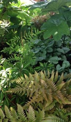 Peggy's garden in Washington State - FineGardening - A woodland shade garden that includes autumn fern, Impatiens omeiana, Brunnera 'Jack Frost', an - Tropical Garden Design, Tropical Backyard, Tropical Plants, Fairy Garden Plants, Shade Garden, Outdoor Landscaping, Outdoor Plants, Landscaping Ideas, Jack Frost
