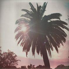 🌴 #portofino #palms #summertime