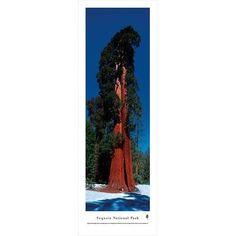 BlakewayPanoramas Sequoia National Park Photographic Print