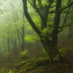 http://voiceofnature.tumblr.com/post/82792620758/darkface-la-niebla-la-lluvia-la-luz-by