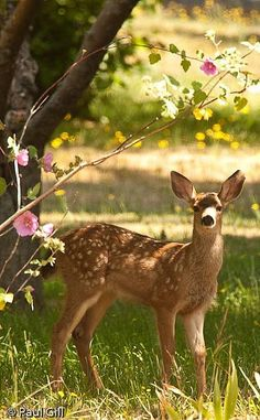 Webmail :: 10 Deer Pins you might like