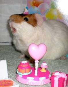 """Happy Birthday to me."" ~  Piggy"