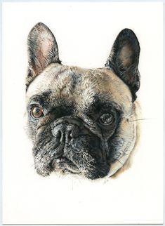Bulldog Francés. Ilustración lápiz. Illustration pencil. Dog portrait French Bulldog, Illustration, Imagination, Dogs, Animals, Bulldog Frances, Portraits, Greyhounds, Art