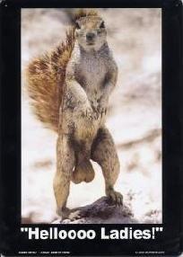 Hellooo Ladies Squirrel Funny Metal Sign